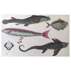 19th Century Oliver Goldsmith Fish Engraving