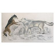19th Century Oliver Goldsmith Jackal and Wolf Engraving