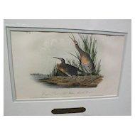 "JOHN J. AUDUBON hand colored 19th century lithograph print ""Clapper Rail or Salt Water Marsh Hen"""