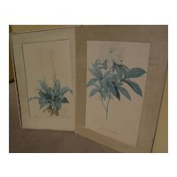 After PIERRE-JOSEPH REDOUTE (1759-1840) botanical  art **PAIR** of hand colored stipple engraving prints as-is condition