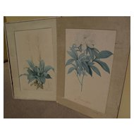PIERRE-JOSEPH REDOUTE (1759-1840) botanical  art **PAIR** of hand colored stipple engraving prints