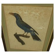 Nicely matted 19th century hand colored print of exotic bird in the style of Audubon