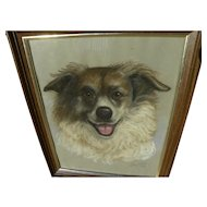 Dog art pastel signed portrait drawing of border collie or Australian Sheepdog dated 1979