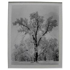 "ANSEL ADAMS (1902-1984) Special Edition Yosemite photo ""Oak Tree, Snowstorm"" printed by Alan Ross from original negative"