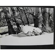 Black and white photograph of snow in woods from estate of Charlton and Lydia Heston
