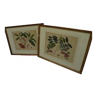 PAIR original botanical drawings of tropical fruits circa 1850