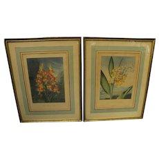 DOCTOR ROBERT JOHN THORNTON **pair** fine botanical prints quarto edition circa 1812