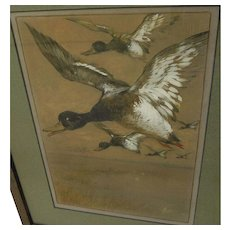 WILLIAM SCHMEDTGEN (1862-1936) watercolor painting of flying ducks by noted American illustrator artist