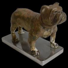 Antique Vienna Cold Painted Bronze Boxer Dog c.1900 - Car Mascot