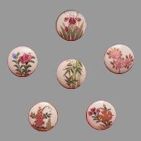 6 Satsuma Floral Buttons, Framed