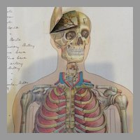 Philips' Popular Manikin, Anatomy Fold Out Medical Book 1920