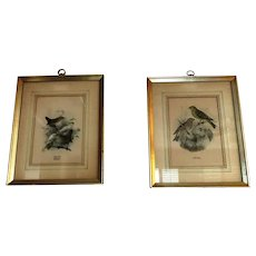 2 Vintage Framed Bird Prints
