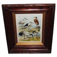 19th Century Framed Exotic Birds Chromolithograph