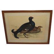 19th Century Framed Black Grouse Chromolithograph