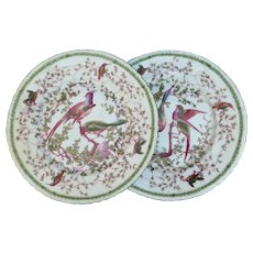 A Pair of Antique Austrian Plates Featuring Colorful Birds