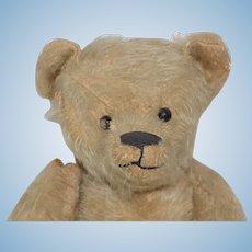 "13"" Antique Ideal Mohair Bear Shoe Button Eyes TLC"
