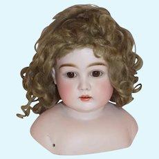 "Antique German Kestner Turner Shoulder Head Doll ""N"" Original Mohair Wig Plaster Pate"