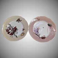 Haviland Limoges 2 Antique Cabinet Plates Shells Seaweed Fish Pour J. Mc D & S