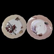 Haviland Limoges 2 Antique Cabinet Plates Shells Seaweed Fish