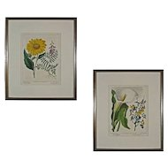 Pair Large Color Botanical Engravings Framed and Matted - c. 19th Century, England
