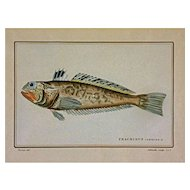 Antique Color Fish Etching by Werner & Schmelz after Cuvier's Histoire Naturelle des Poissons - 19th Century, France