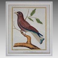 "Antique French Bird Engraving Le Rolle de Madagascar  from ""Histoire Naturelle des Oiseaux"" Martinet & Buffon"