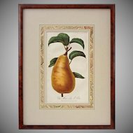 Botanical Pear Color Lithograph Matted Framed Burl Wood - 19th Century, England