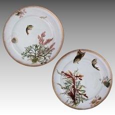 Pair George Jones Fish Seaweed Sea Shell Porcelain Plates - c. 19th Century, England
