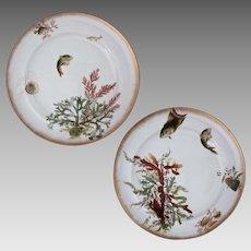 Pair George Jones Fish Seaweed Sea Shell Plates - c. 19th Century, England