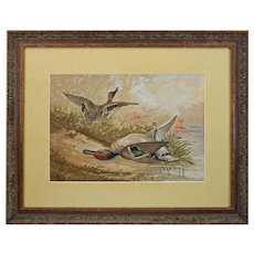 "Fine Lithograph Duck Hunt ""The Green Winged Teal"" after A. Pope Jr Framed Large"