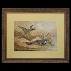 """Fine Lithograph Duck Hunt """"The Green Winged Teal"""" after A. Pope Jr Framed Large"""