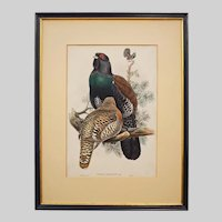 Cock of the Wood from Birds of Great Britain Color Lithograph Framed - 19th Century, England