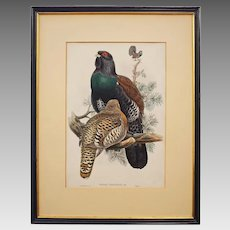 Tetrao Urogallus - Cock of the Wood by WOLF from Birds of Great Britain Color Lithograph - 19th Century, England