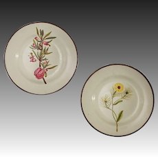 Pair English Pearlware Creamware Botanical Plates - c. 1750 to 1820, England