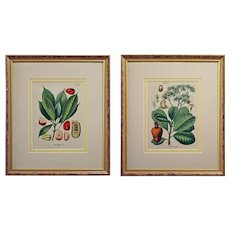 Pair Antique German Botanical Prints from Kohler's Medicinal Plants - c. 1887, Germany