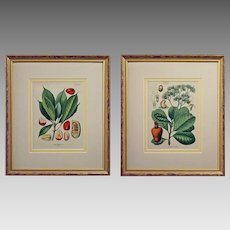 Pair Antique German Botanical Prints from Kohler's Medicinal Plants - c. 1887, Germany