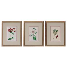 Set 3 English Botanical Plates Antique Victorian Matted Framed