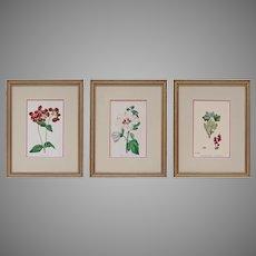 Set 3 English Botanical Plates Antique Victorian Matted Framed