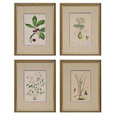 Set 4 English Botanical Plates Antique Victorian Matted Framed