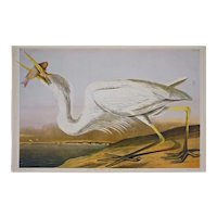 Great White Heron and Fish Key West View Plate 368 After Audubon and Bien Print