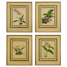 Set 4 Orchid English Botanicals Matted and Framed Antique J. Nugent Fitch - circa 19th Century, England