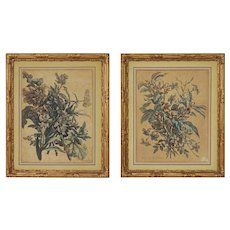 Pair French Botanical Monnoyer Nicolas de Poilly Engravings Laid Paper GIlt Carved Wood Frames - circa 1700, France