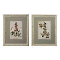 Pair Botanical Prints Framed Decorative Distressed Frames Ranunculus Delphinium - 20th Century