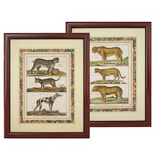 Pair Early Leopard Dog Animal Engravings Histoire Naturelle Quadrupedes Count Buffon / Benard Matted Framed - c. 18th/19th C., France