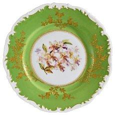 Botanical Orchid Phalaenopsis Stuartiana Tressemanes & Vogt Porcelain Plate Artist Signed Antique - 1892 - 1907 mark, France