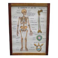 Anatomical poster Set