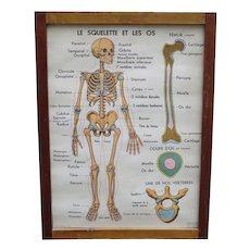 Framed Teaching Set of 8 Double Sided Anatomical Posters from France