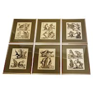 Historic set of Zoological Engravings.