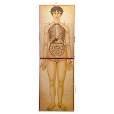 Important  Printed Anatomical 'Decoupage' Poster Figure