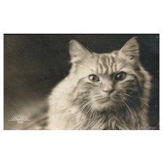 Real Photo Close up tabby Cat vintage postcard